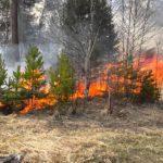 С начала сезона в Кировской области произошло 22 лесных пожара