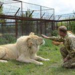В крымском сафари-парке лев прокусил руку туристке из Кирова