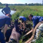 В Кирово-Чепецком районе сотрудники МЧС вызволили из канавы лошадь, которая могла погибнуть