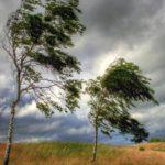 На Кировскую область идут грозы: МЧС объявило метеопредупреждение