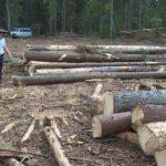 В Нагорском районе за незаконную рубку леса осужден участковый лесничий: нанесенный ущерб составил более 6 млн рублей