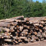 В Опаринском районе осужден лесничий, незаконно вырубивший лесных насаждений на 6 млн рублей