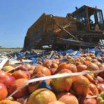 В Кирове раздавили 800 кг санкционных овощей и фруктов: уничтожены грибы, перцы и персики из Литвы