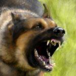 Растерзанная собаками в Кирово-Чепецком районе пенсионерка умерла: следком расследует уголовное дело