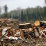 Санчурский районный суд взыскал с осужденного ущерб за причинение вреда животному миру