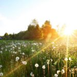 Синоптики прогнозируют жаркий август в Кировской области