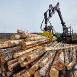 От лесной отрасли в бюджет Кировской области поступило более 1 млрд рублей