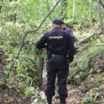 В Омутнинском районе нашли тело без вести пропавшего грибника