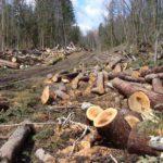 В Опаринском районе за незаконную рубку леса на сумму более 4 млн рублей осуждён бывший лесничий
