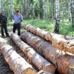 В Кировской области к 5,5 годам осуждён лесничий за причинение ущерба лесному фонду в размере 1 млн рублей