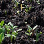 В Кировской области одна из самых грязных почв