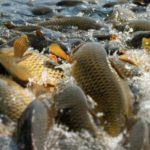 В Кировской области за незаконную рыбалку в нерестовый период вынесено штрафов на 533 тысяч рублей