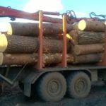 Инспекторы обнаружили незаконную рубку леса в «зеленой зоне» города Советска: ущерб составил 745 тысяч рублей