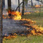В Зуевском районе ликвидировали лесной пожар