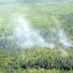 На территориях Зуевского и Вятскополянского районов потушены лесные пожары