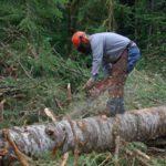 В Омутнинске осуждённый лесоруб возместил ущерб лесному фонду на сумму более 500 тысяч рублей