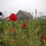 В Санчурске будут судить местную жительницу за 50 растений мака на приусадебном участке