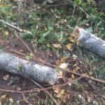 В Малмыжском районе на рабочего упало дерево: от удара мужчина погиб на месте
