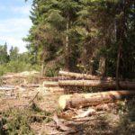В Афанасьевском районе возместили ущерб, причиненный лесному хозяйству незаконной рубкой