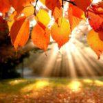 Синоптики: В сентябре погода в Кировской области будет сухая и теплая