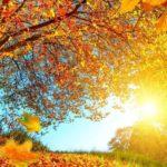 Погода на выходные: в Кировской области потеплеет до 18 градусов