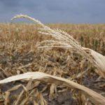 В четырех районах Кировской области ввели режим чрезвычайной ситуации