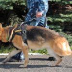В Малмыжском районе ночью украли товар из магазина: служебно-разыскная собака привела полицейских к дому, где было спрятано похищенное