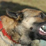В Кирове собака напала на двух детей: следком проводит проверку