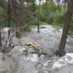 Ущерб забетонированному лесу в Кирове оценен более чем в 1 миллион рублей