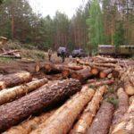 Депутат сельской Думы Омутнинского района попытался скрыть незаконную рубку леса: возбуждено уголовное дело
