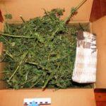 В Кильмези у местного жителя изъяли около 7,5 килограммов конопли