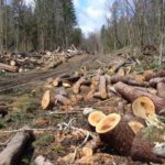 В Верхнекамском районе возбуждено уголовное дело по факту незаконной рубки леса на сумму более 1,5 млн рублей