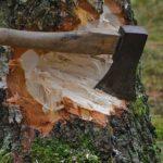 Возбуждено уголовное дело по факту незаконной рубки лесных насаждений в Нововятском районе города Кирова