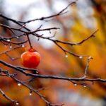 Погода на неделю: в Кировской области будет пасмурно, ночью ожидаются заморозки
