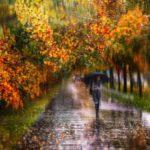 Погода в Кировской области: неделя будет дождливой