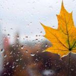 Погода на неделю: в Кировской области ожидаются дожди и ветер