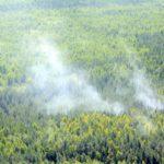 В лесах Кировской области завершился пожароопасный сезон: разрешено сжигание порубочных остатков в местах заготовок