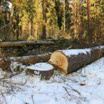 В Верхнекамском районе возбуждено уголовное дело по факту незаконной рубки леса на сумму более 500 тыс. рублей