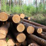 В Советске суд взыскал с осуждённого компенсацию вреда, нанесенного в результате незаконной рубки леса