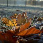 В выходные в Кировской области похолодает до -1°C
