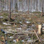 В Верхнекамском районе возбудили еще одно уголовное дело по факту незаконной рубки леса на сумму почти 900 тысяч рублей