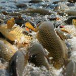 Правительство увеличило размер взыскания за ущерб, причиненный браконьерами