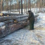 Житель Фаленского района осужден за незаконную рубку леса на сумму более 1,8 млн рублей