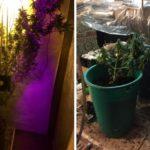 В Вятских Полянах полицейские задержали мужчин, которые сбывали наркотики: подозреваемые выращивали коноплю у себя дома
