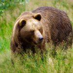 30 ноября в Кировской области завершается сезон охоты на медведя: за четыре месяца охотники добыли 22 особи