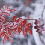Синоптики: В ноябре жителей Кировской области ждет относительно теплая погода и поздние снегопады