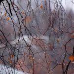 Погода на неделю: к выходным в Кировской области похолодает до -6°C