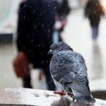 Синоптики спрогнозировали, сколько в Кировской области продлится ноябрьское похолодание