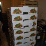 В Кирове раздавили полтонны санкционных яблок и более 100 кг салата