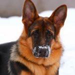 В Унинском районе служебная собака помогла найти заблудившегося лесоруба